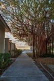 Δέντρο σύκων Strangler κατά μήκος του λιμανιού στη χρυσή ώρα ως σπασίματα ημέρας στοκ φωτογραφία