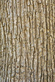 δέντρο σύστασης φλοιών στοκ φωτογραφίες