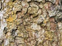 δέντρο σύστασης φλοιών Στοκ φωτογραφία με δικαίωμα ελεύθερης χρήσης