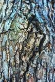 δέντρο σύστασης φλοιών Στοκ εικόνα με δικαίωμα ελεύθερης χρήσης