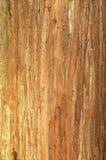 δέντρο σύστασης φλοιών Στοκ φωτογραφίες με δικαίωμα ελεύθερης χρήσης