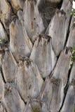 δέντρο σύστασης φοινικών Στοκ Εικόνα