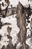 δέντρο σύστασης Στοκ Φωτογραφίες