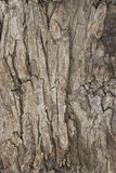 δέντρο σύστασης 2 φλοιών Στοκ φωτογραφίες με δικαίωμα ελεύθερης χρήσης