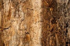 Δέντρο 3 σύστασης Στοκ Φωτογραφίες