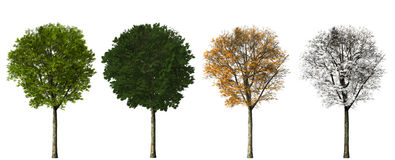 Δέντρο - τέσσερις εποχές Στοκ φωτογραφίες με δικαίωμα ελεύθερης χρήσης