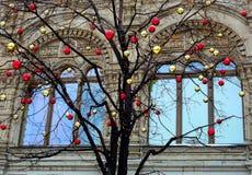 Δέντρο της γνώσης Στοκ εικόνα με δικαίωμα ελεύθερης χρήσης