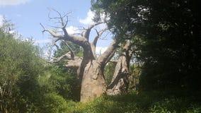 Δέντρο της ζωής στοκ φωτογραφίες με δικαίωμα ελεύθερης χρήσης