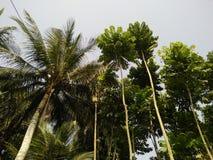 Δέντρο της καρύδας στοκ φωτογραφία