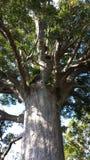 Δέντρο της Νέας Ζηλανδίας Στοκ Εικόνες