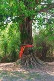 Δέντρο της πεποίθησης Στοκ Φωτογραφίες