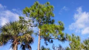 Δέντρο της Φλώριδας λ Στοκ εικόνα με δικαίωμα ελεύθερης χρήσης