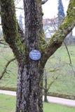 Δέντρο της Apple, κίτρινο Boskop με την πινακίδα το χειμώνα, στο δημόσιο πάρκο baden-Baden ιδιοκτησίας φρούτων Στοκ φωτογραφία με δικαίωμα ελεύθερης χρήσης