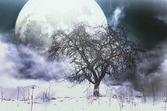 Δέντρο της Apple και ένα φεγγάρι Στοκ φωτογραφία με δικαίωμα ελεύθερης χρήσης