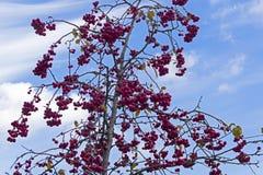 Δέντρο της Apple με τα ώριμα κόκκινα μήλα Στοκ Εικόνα