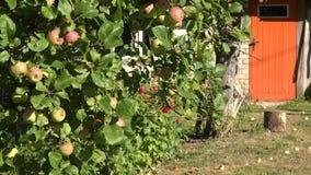 Δέντρο της Apple με χρωματισμένο καλοκαίρι πορτών φρούτων και σπιτιών το πορτοκάλι 4K απόθεμα βίντεο