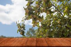 Δέντρο της Apple πέρα από τον παλαιό σκοτεινό ξύλινο πίνακα ή τον πίνακα Μπλε ουρανός όπως το NA Στοκ φωτογραφία με δικαίωμα ελεύθερης χρήσης