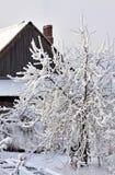 Δέντρο της Apple που καλύπτεται με το χιόνι στο υπόβαθρο ενός εξοχικού σπιτιού Στοκ φωτογραφία με δικαίωμα ελεύθερης χρήσης