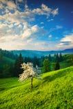 Δέντρο της Apple σε έναν πράσινο λόφο Στοκ φωτογραφίες με δικαίωμα ελεύθερης χρήσης