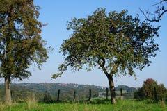 Δέντρο της Apple σε ένα λιβάδι Στοκ φωτογραφία με δικαίωμα ελεύθερης χρήσης
