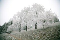 Δέντρο της Apple στην άνοιξη Στοκ εικόνα με δικαίωμα ελεύθερης χρήσης