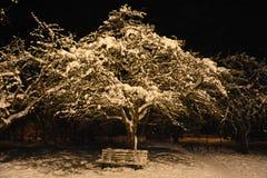Δέντρο της Apple στη νύχτα Στοκ Φωτογραφίες