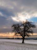 Δέντρο της Apple στη χειμερινή ανατολή Στοκ Φωτογραφίες