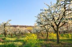 Δέντρο της Apple στον κήπο Στοκ φωτογραφία με δικαίωμα ελεύθερης χρήσης