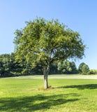 Δέντρο της Apple στο αγροτικό τοπίο Στοκ Φωτογραφίες