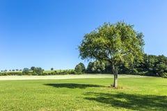 Δέντρο της Apple στο αγροτικό τοπίο Στοκ φωτογραφίες με δικαίωμα ελεύθερης χρήσης