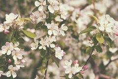 Δέντρο της Apple στο αναδρομικό ύφος Στοκ Φωτογραφία
