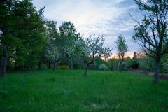 Δέντρο της Apple στο ηλιοβασίλεμα Στοκ Εικόνες
