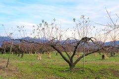 Δέντρο της Apple στο authumn Στοκ Εικόνες