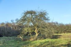 Δέντρο της Apple το φθινόπωρο κάτω από το μπλε ουρανό Στοκ εικόνες με δικαίωμα ελεύθερης χρήσης