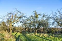 Δέντρο της Apple το φθινόπωρο κάτω από το μπλε ουρανό Στοκ Εικόνες
