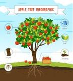 Δέντρο της Apple infographic Στοκ Εικόνα