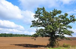 δέντρο τοπίων Στοκ Εικόνες