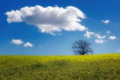 Δέντρο τοπίων Hill Στοκ Εικόνες