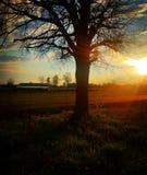Δέντρο του ηλιοβασιλέματος στοκ εικόνα με δικαίωμα ελεύθερης χρήσης