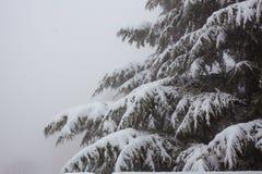 Δέντρο του FIR στο χιόνι Στοκ φωτογραφία με δικαίωμα ελεύθερης χρήσης