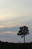 Δέντρο το βράδυ στο Βορρά, Ταϊλάνδη Στοκ φωτογραφία με δικαίωμα ελεύθερης χρήσης