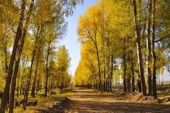 Δέντρο το φθινόπωρο στοκ εικόνες