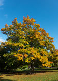 Δέντρο το φθινόπωρο Στοκ φωτογραφίες με δικαίωμα ελεύθερης χρήσης
