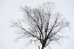 Δέντρο το χειμώνα Στοκ Φωτογραφίες