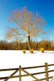 Δέντρο το χειμώνα Στοκ φωτογραφία με δικαίωμα ελεύθερης χρήσης