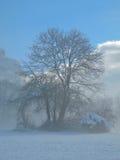 Δέντρο το χειμώνα Στοκ Εικόνες