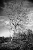 Δέντρο το χειμώνα στοκ φωτογραφίες με δικαίωμα ελεύθερης χρήσης