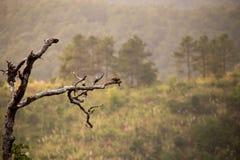 Δέντρο τράπεζας σε υψηλό Mountian Στοκ Εικόνες
