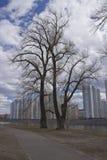 Δέντρο των πολυκατοικιών στοκ εικόνες