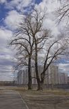 Δέντρο των πολυκατοικιών στοκ φωτογραφίες